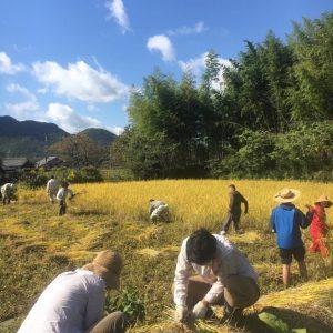 高平地区での農体験(収穫)